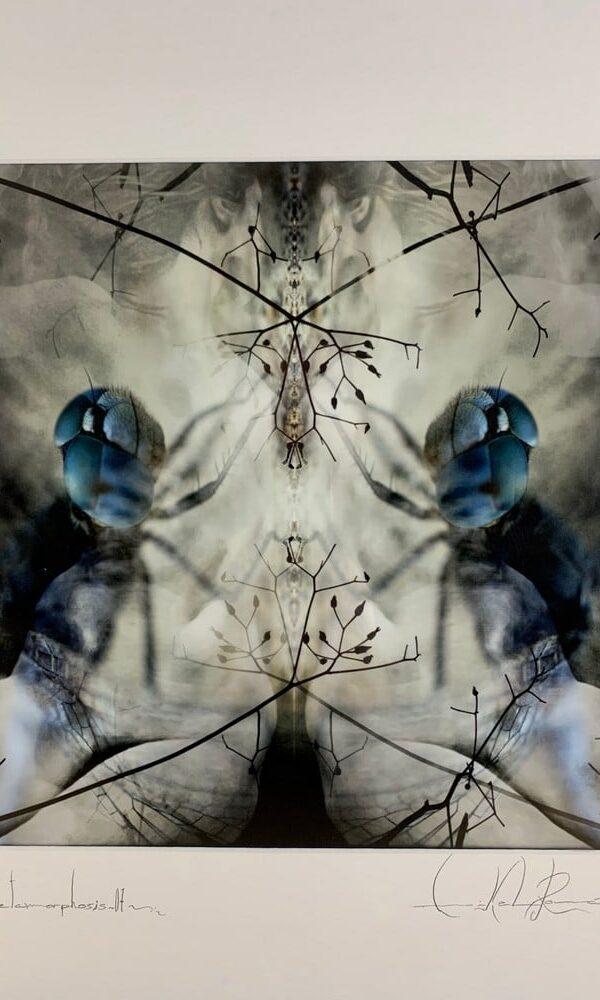 Metamorphosis 07