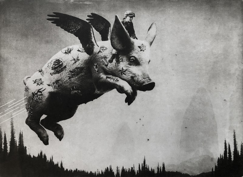 pigs-do-fly